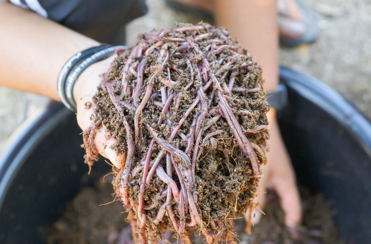11 Benefits Of Vermicomposting & How To Get Started With Your Own Worm Bin