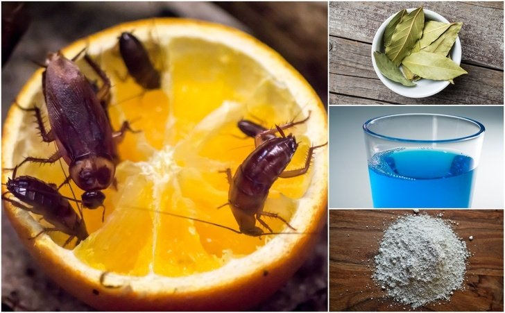 How To Get Rid Of Cockroaches 11 Home Remedies That Really Work