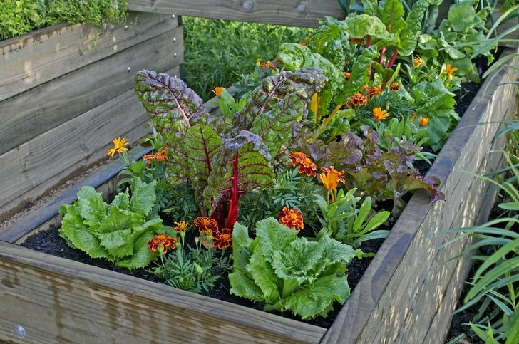 Give Your Plants And Vegetables A Healthy Home For Growth This Raised Gardening Bed Is Designed With Plenty Of Room To Grow Their Full