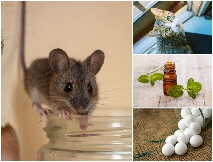 How To Get Rid Of Mice: 6 Home Remedies That Work