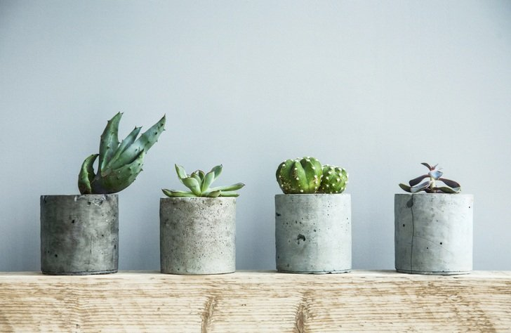 Total Guide To Caring For Succulents Indoors & Outdoors