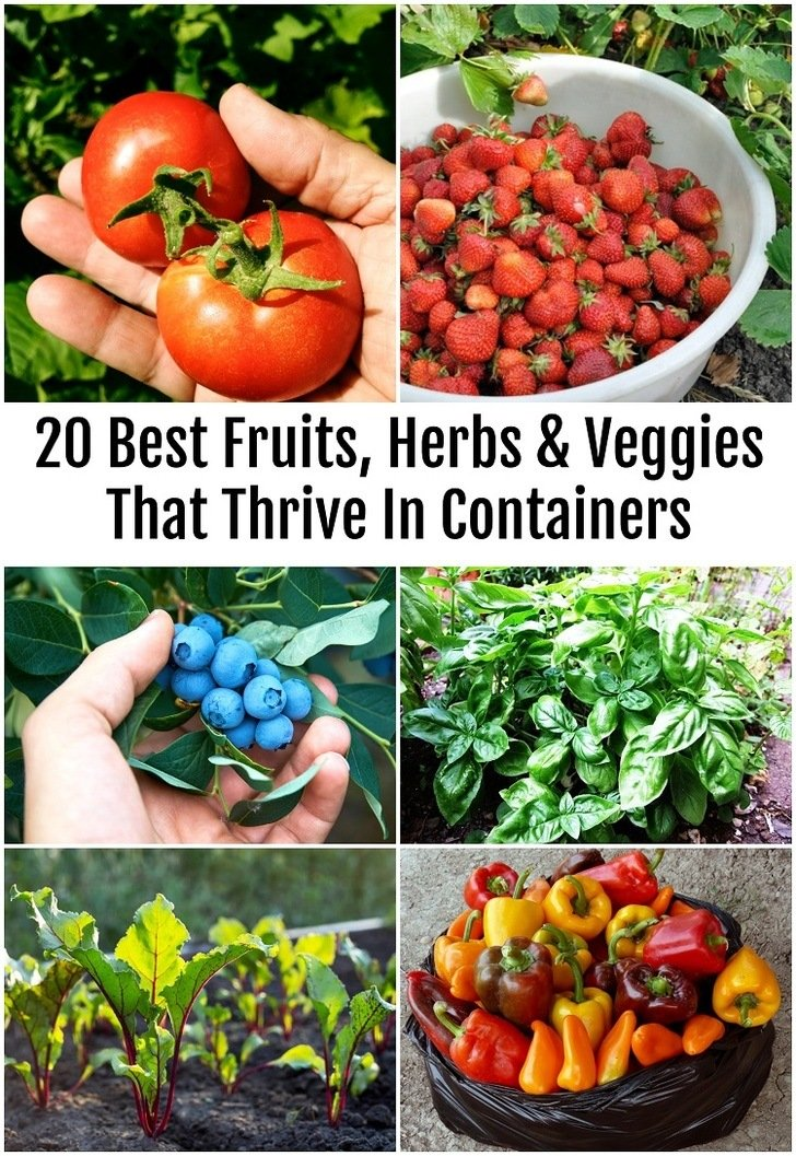 Having fresh and handy fruits, vegetables and herbs is not the only advantage to container gardening.  In containers, you can grow exotic edibles, extend the growing season, and overcome zone limitations and space constraints. You know what you are eating, where it comes from and you will most likely have enough to share with others.