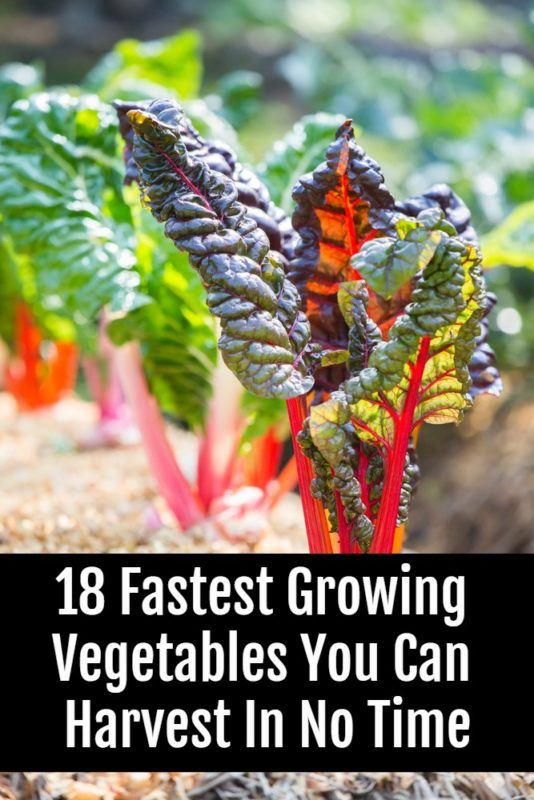 18 Of The Fastest Growing Veggies You Can Harvest In No Time