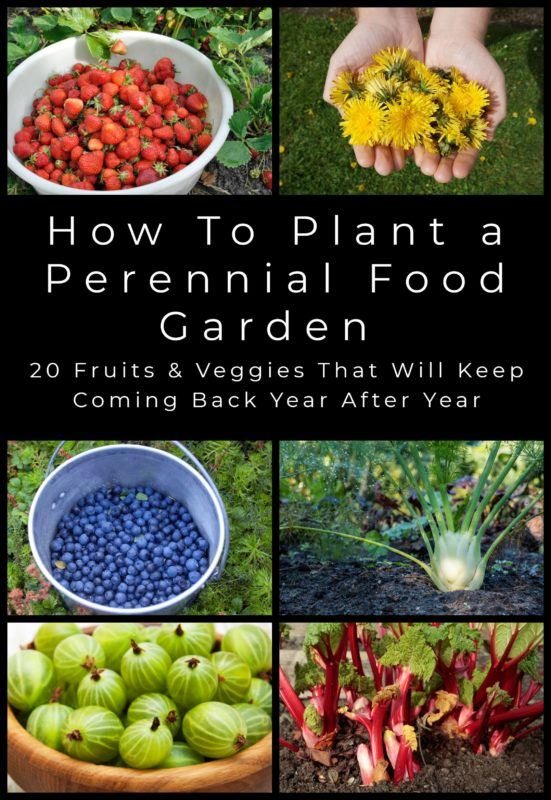 How To Plant A Perennial Food Garden - 20 Fruits & Veggies You Can Plant Once & Harvest For Years