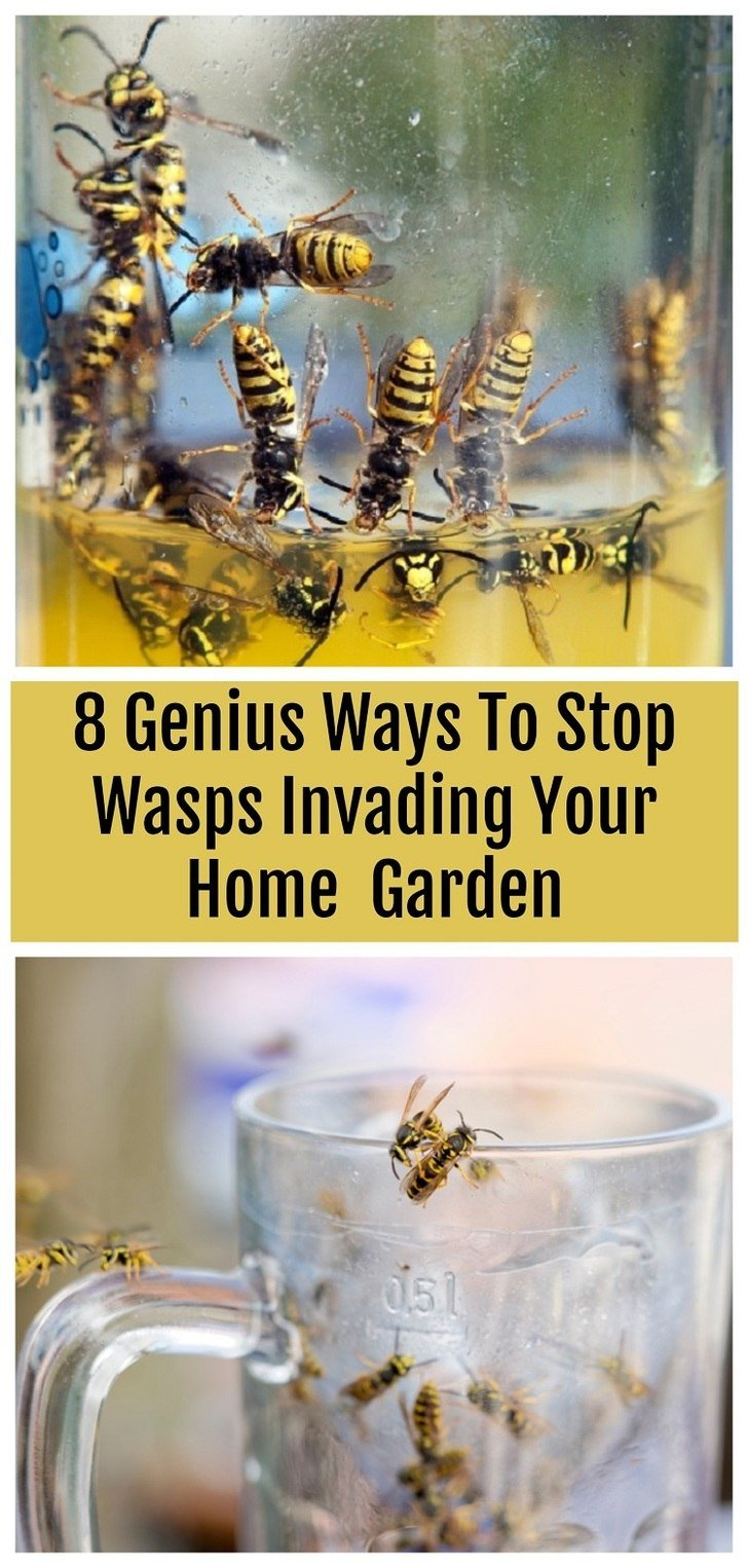 If wasps are ruining all of your outdoor events then try these clever tricks to keep