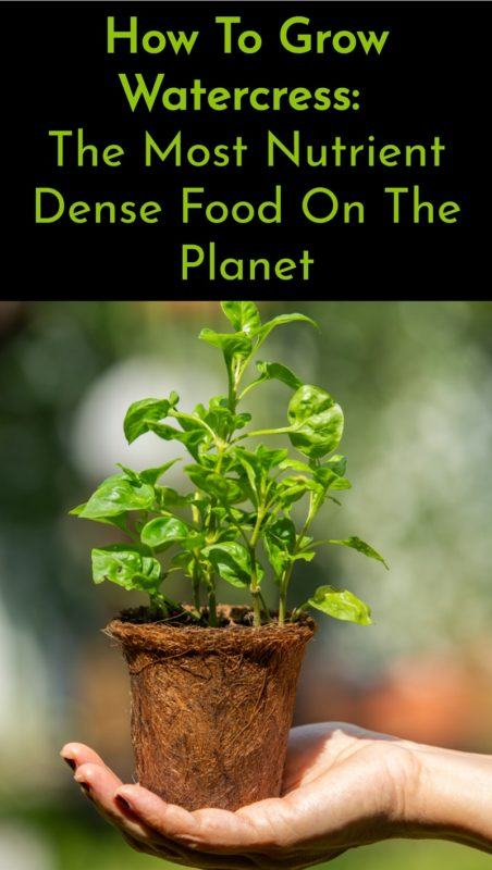 How To Grow Watercress: The Most Nutrient Dense Food On The Planet