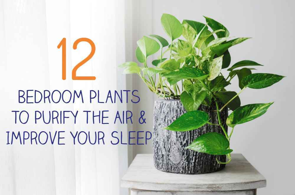 12 Bedroom Plants To Purify The Air & Improve Your Sleep