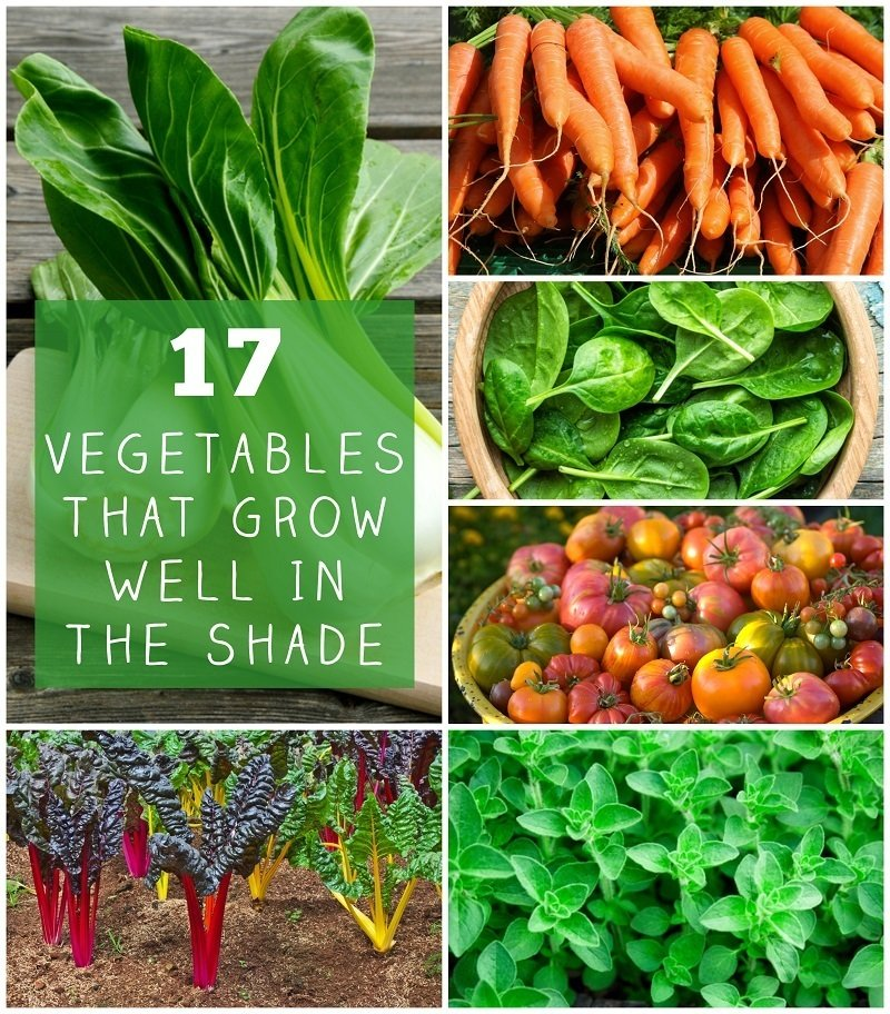 Best Vegetables To Grow In Raised Beds: 17 Vegetables That Grow Well In The Shade