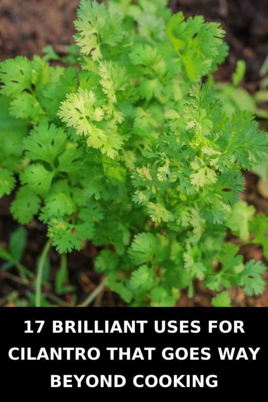 17 Brilliant Uses For Cilantro That Goes Way Beyond Cooking