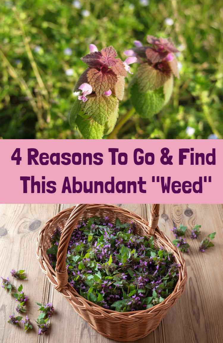 "4 Reasons To Go & Find This Abundant ""Weed"""