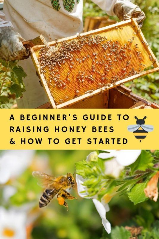 A Beginner's Guide To Raising Honey Bees & How To Get Started