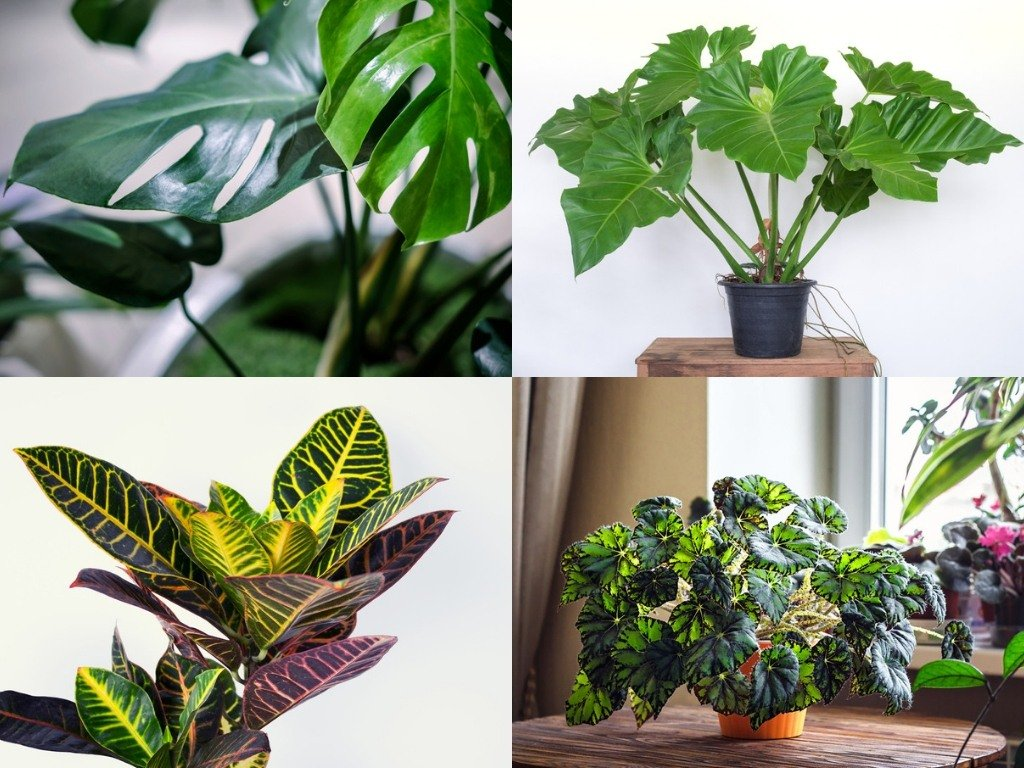 27 Tropical & Exotic House Plants You Should Grow In Your Home