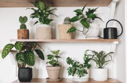 21 Accessories To Take Your Houseplant Game To The Next Level