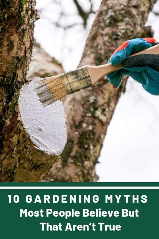 10 Gardening Myths Most People Believe But That Aren't True