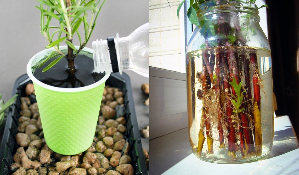25 Plants Herbs You Can Propagate From Cuttings